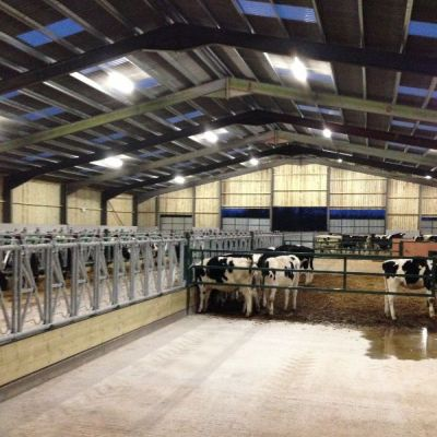 Cowshed Lighting